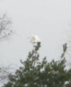 Wilde crane