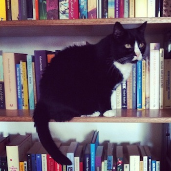 Nina cat checking out our bookshelves